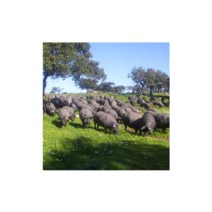 Jamón ibérico directamente de la ganadería.